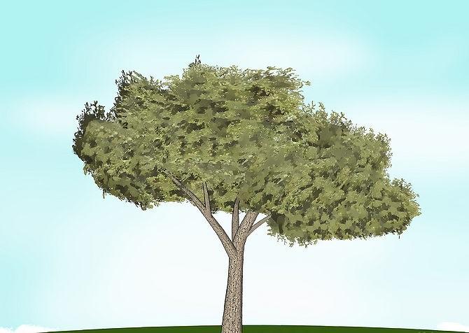 Hoe kan je zelf een boomhut bouwen hobby bouwtekening - Hoe een boom te verlichten ...