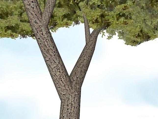 v-vorm-boom-voor-boomhut